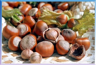 Hazelnut-Products1