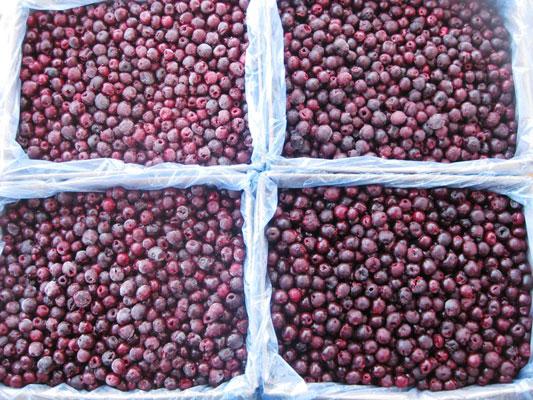 IQF-sweet-cherry-2